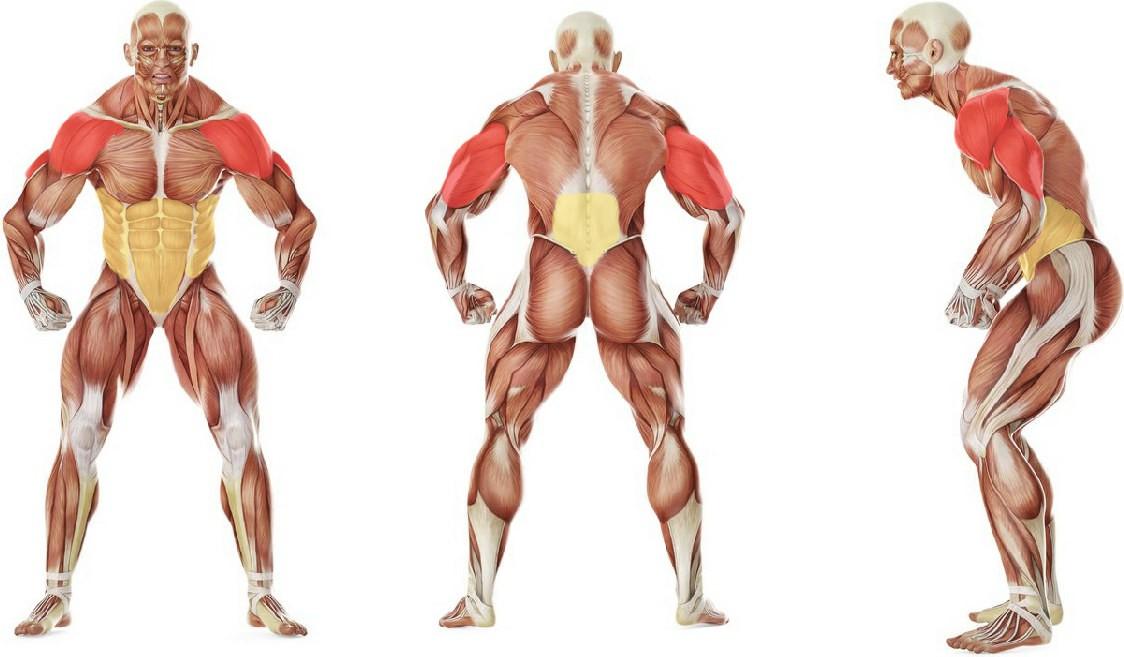 Какие мышцы работают в упражнении Ходьба на руках с партнером