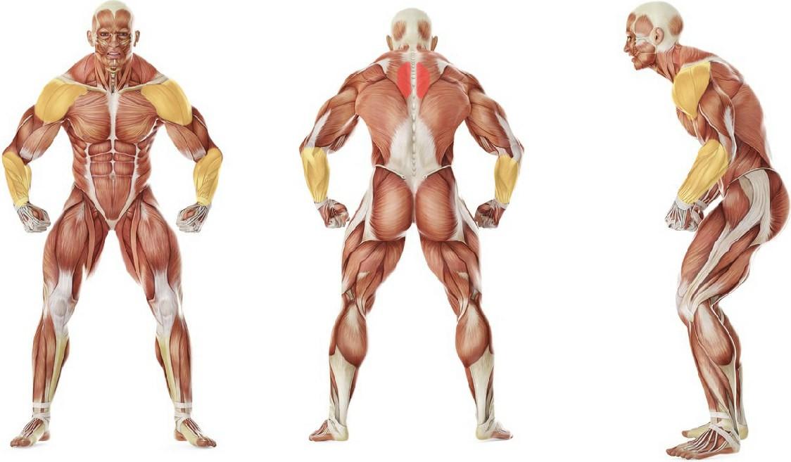 Какие мышцы работают в упражнении Гусеница