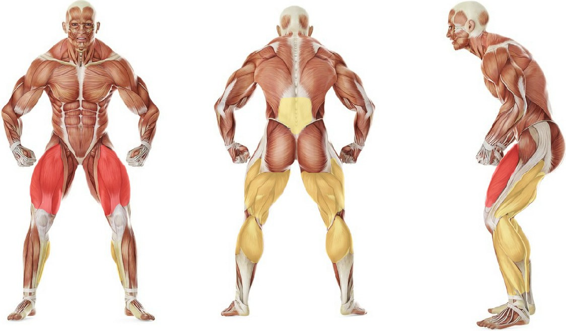 Какие мышцы работают в упражнении Боковые выпады со штангой