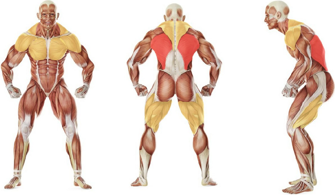 What muscles work in the exercise Плавание кролем на груди