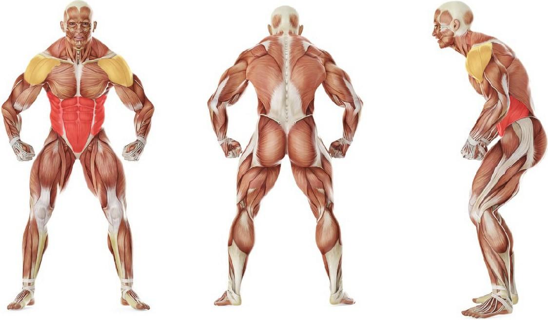 What muscles work in the exercise Подъем руки с разворотом корпуса в положении планка