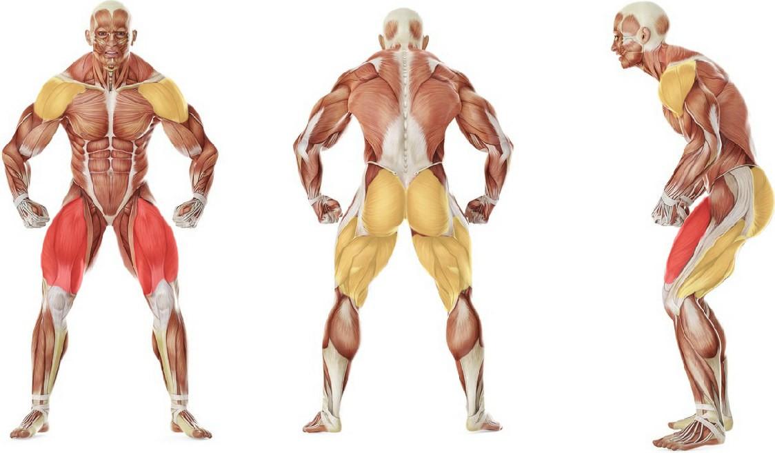 Какие мышцы работают в упражнении Бросок мяча из-за головы с приседанием