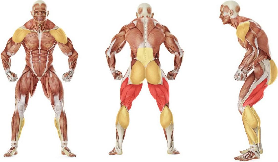 Какие мышцы работают в упражнении Махи гири двумя руками