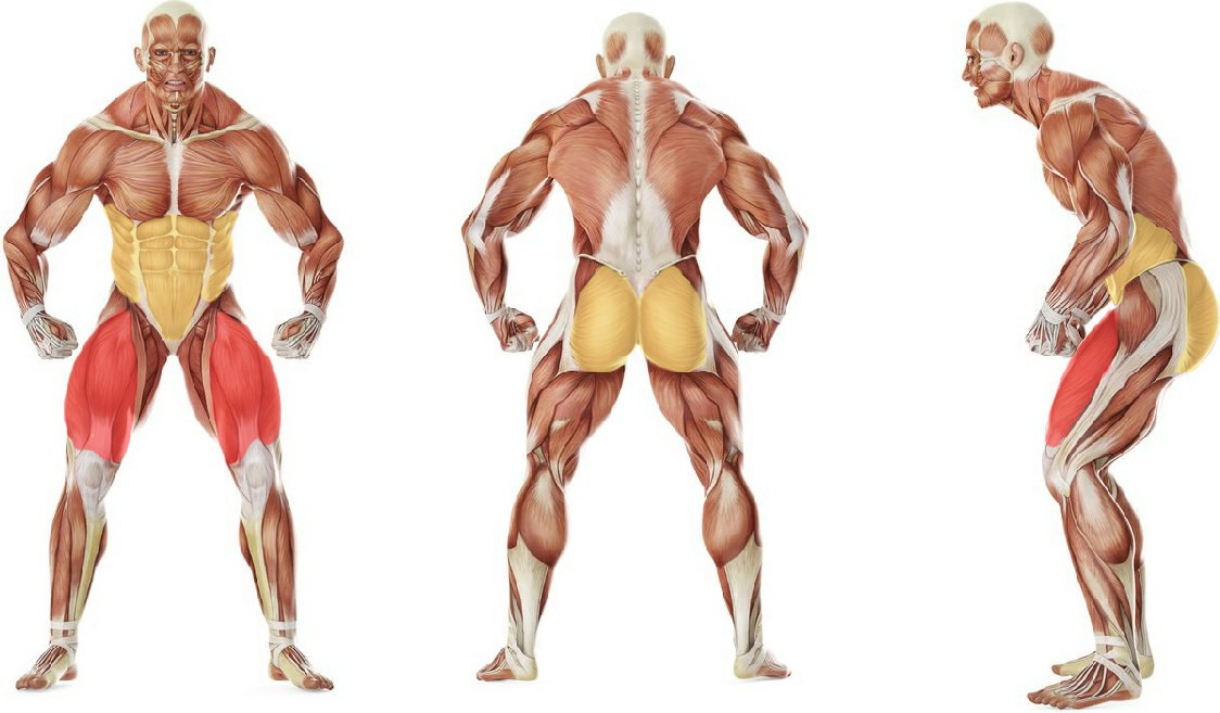 What muscles work in the exercise Приседания с выпрыгиванием