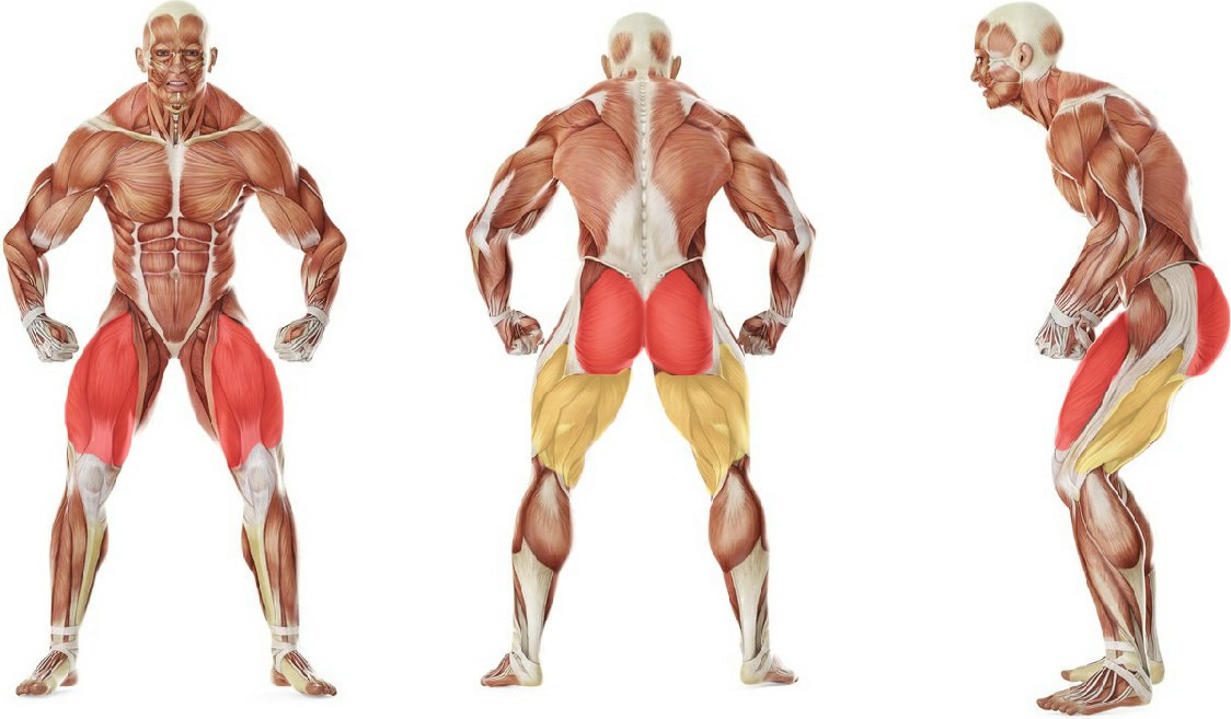 What muscles work in the exercise Приседания плие без веса