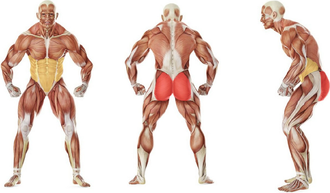 What muscles work in the exercise Наклоны вперед