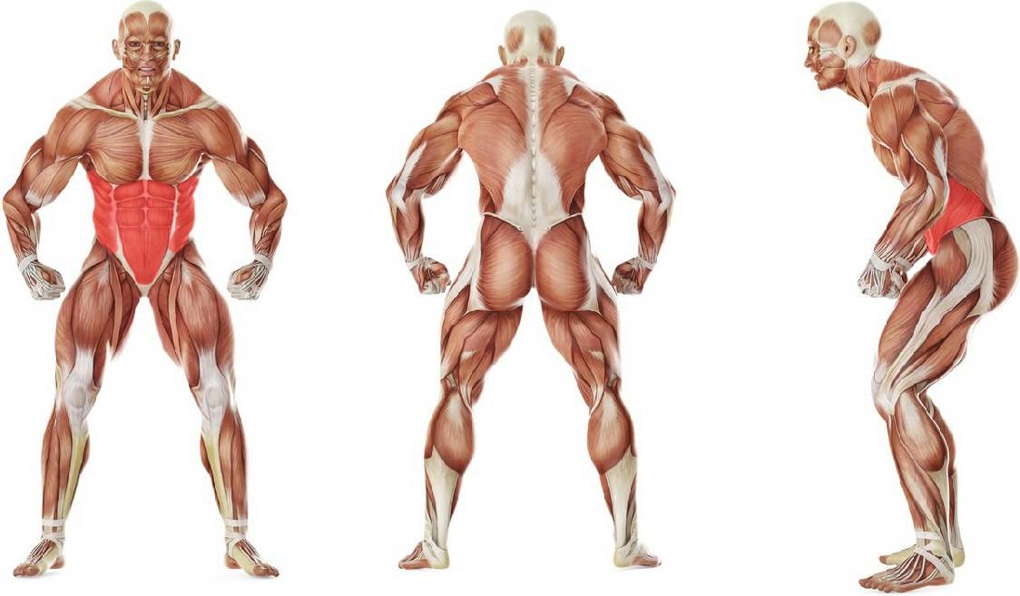 What muscles work in the exercise Подъем туловища в висе на перекладине вниз головой