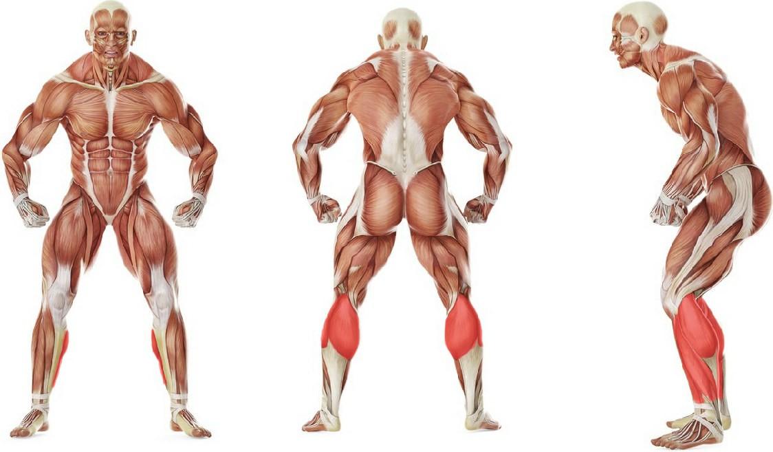 What muscles work in the exercise Подъем на носок с гантелей с помощью подставки