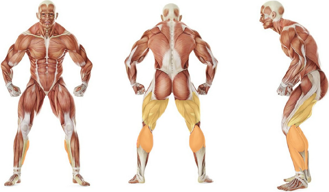 What muscles work in the exercise