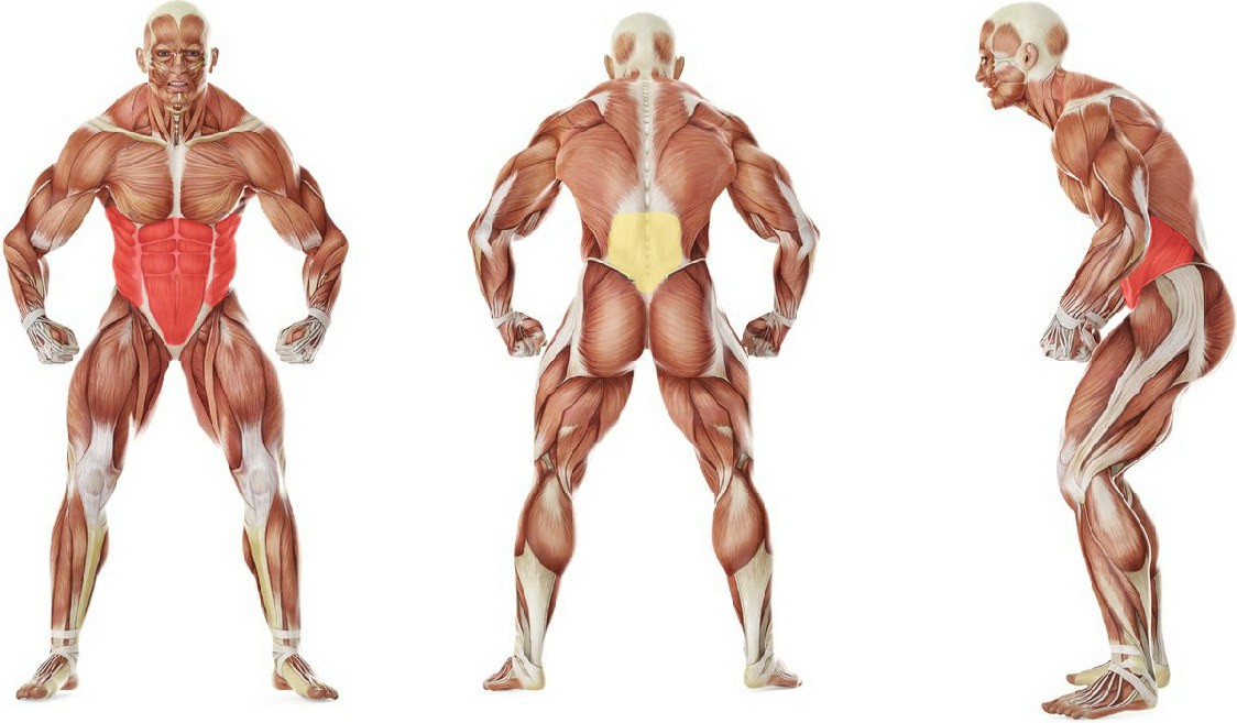 What muscles work in the exercise Barbell Side Bend